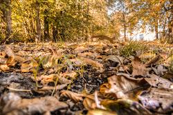 la bellezza dell'autunno
