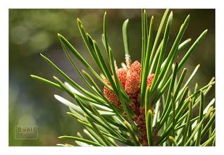 Photo: Eastern Sierras-20120717-722