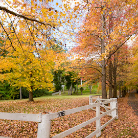 Autumn Beauty by Mel Stratton - City,  Street & Park  Neighborhoods ( driveway, fall, leaves, daylight, autumn, trees, fence,  )