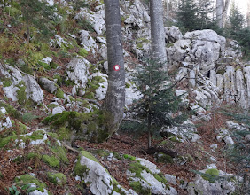 Photo: zanimljiv oblik stabla