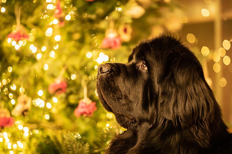 Christmas at home di FilippoColombo