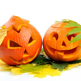 Two orange halloween pumpkins Jack O Lanterns isolated on white background by Ira Ivanova - Public Holidays Halloween ( seasonal, yellow, ghost, party, halloween, gourd, lantern, nature, autumn, jack-o-lantern, head, smile, trick, light, scary, isolated, orange, symbol, pumpkin, agriculture, carving, white, fun, holiday, magic, season, food, vegetable, evil, treat, plant, face, jack, decorative, object, cute, laughing, happy, pwcpumpkins, decoration, spooky, funny, traditional, background, fall, celebration, harvest, october, horror, produce, fear )