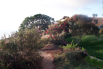 Photo: The foliage varies somewhat from visit to visit, I notice, but the bougainvillea is a constant. August 2002 photo.