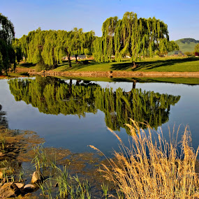 Glass Pond by Clyde Smith - City,  Street & Park  City Parks ( reflection, pond, willow treees, reflections, mirror )