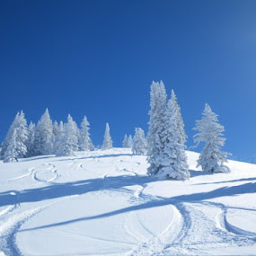 Winter Wonderland by Scott Williams-Collier - Landscapes Mountains & Hills