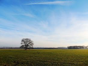 Photo: ... allein auf weiter Flur.  #tree  #landscape  #alone  #Altmark