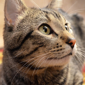 Bobbins!!! by Sean Valdez - Animals - Cats Portraits
