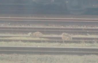 Photo: První králíci - v Pardubicích na nádraží