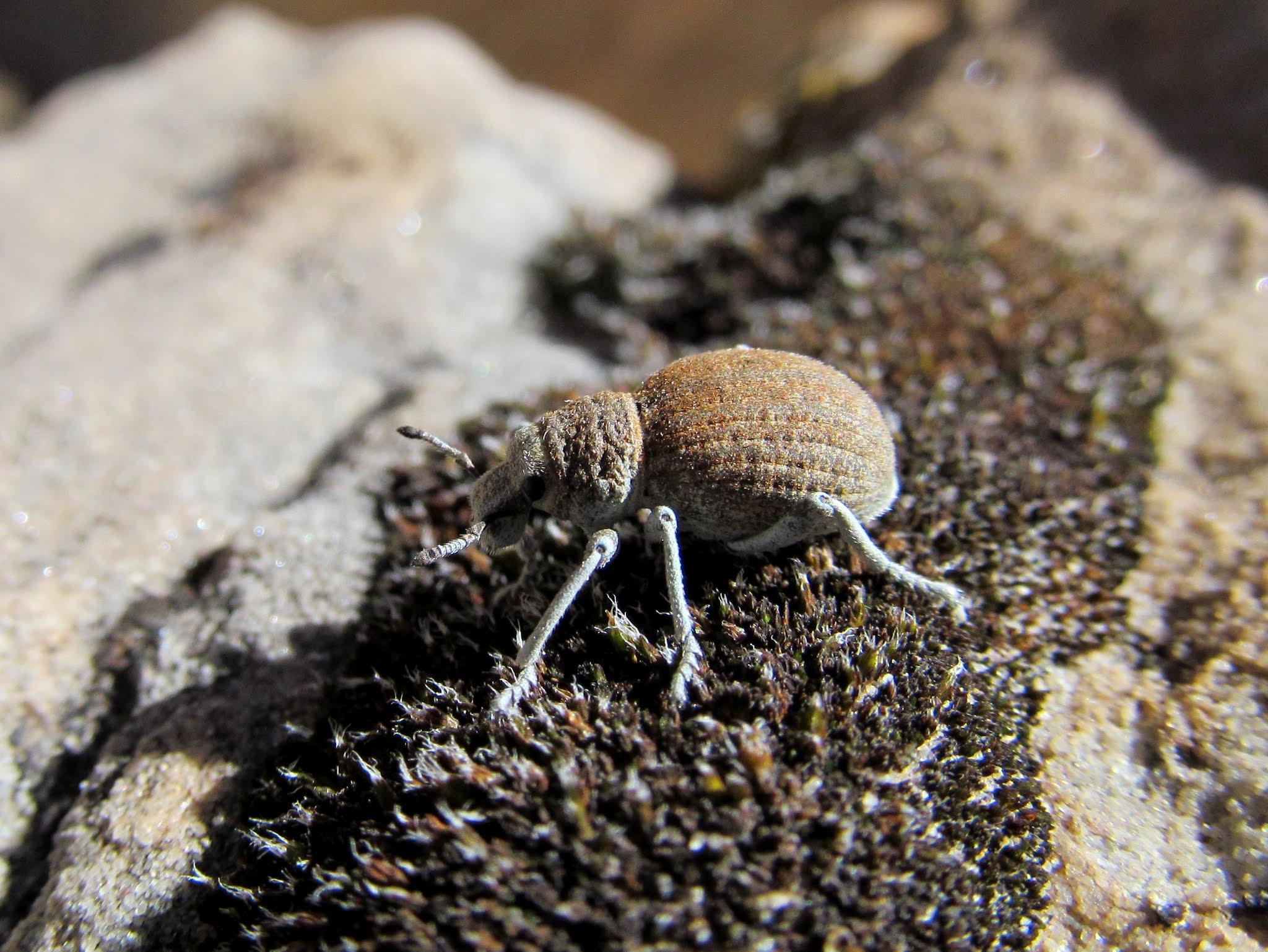 Photo: Strange insect