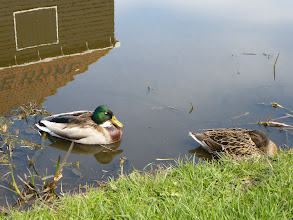 Photo: Can't resist duckies, either