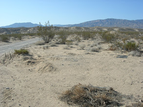 Photo: Camp Rock Road along North edge of study site