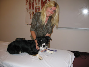 Photo: Deb during class at the Boulder College of Massage, Canine Certifcation program.
