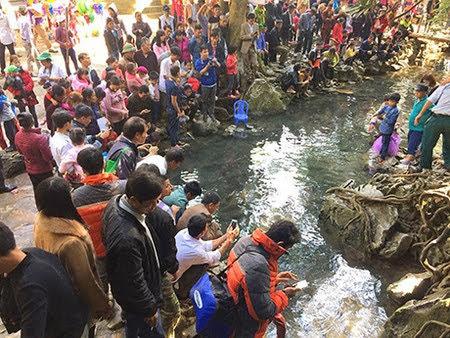 Suối cá thần Cẩm Lương đông khách đột biến