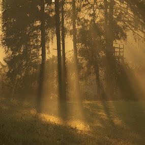Paprsky by Jana Černošková - Landscapes Forests (  )