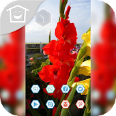 Beautiful red flowers in sprin