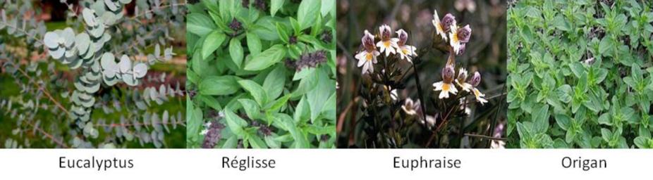 les plantes remedes respiratoires