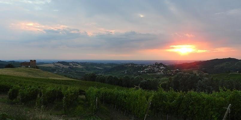 le vigne dell' Oltrepo Pavese di fratitti