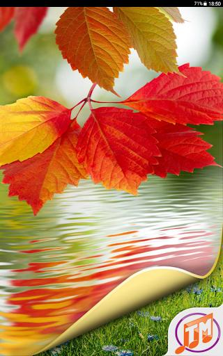 Nature Wallpaper Hd Free Apk Download Apkpureco