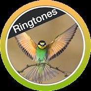 Birds Ringtones Free 2018 APK icon