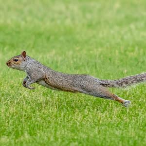 19 squirrel.jpg