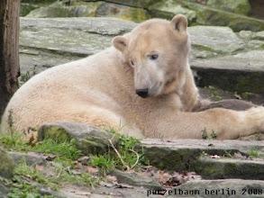 Photo: Ein gluecklicher Knut mit seinem Geburtstagsjutesack :-)))
