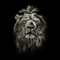Lion King CM Locker Theme icon