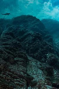 Requins et poissons vus du dessous près d'un récif