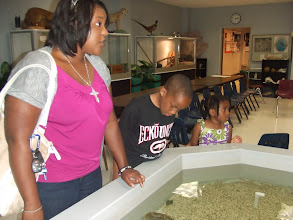 Photo: looking over the tank at the Science Museum