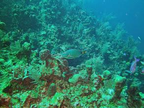 Photo: Rainbow Parrotfish