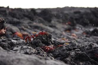 Photo: Sally Lightfoot Crabs