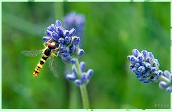 Photo: colorful fauna and flora