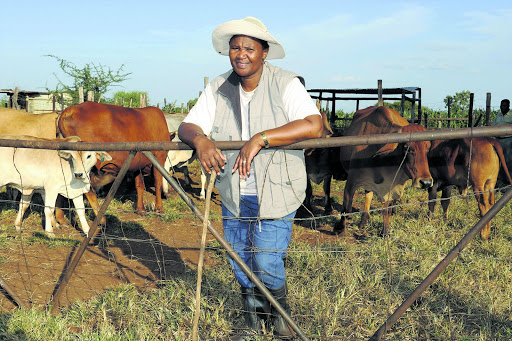 A cattle farmer in Mookgophong, Limpopo.