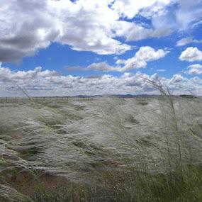 Windswept by Rebecca Imwalle - Landscapes Prairies, Meadows & Fields ( field, sky, africa )