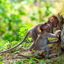 Baby monkeys  by Shalini Jai - Novices Only Wildlife