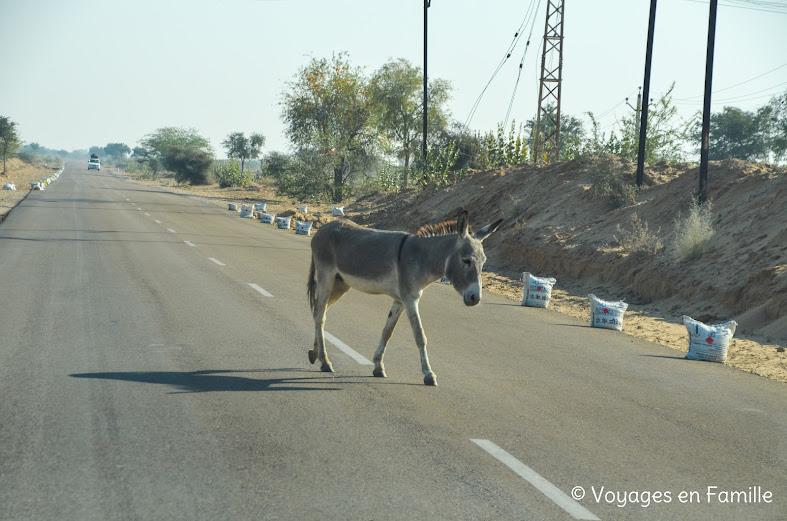 Ane sur route pour Jodhpur