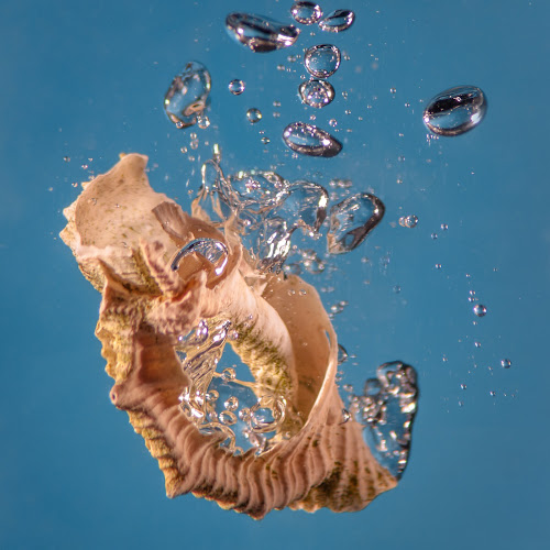 Plopping by Petar Shipchanov - Abstract Water Drops & Splashes ( plop, water, bubble, shell, flop, plump, blue, guggle )