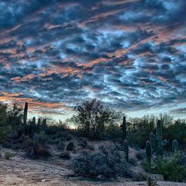 Sunrise over Tucson by Charlie Alolkoy - Landscapes Deserts ( clouds, desert, sky, sunset, sunrise, saguaro, cactus )