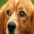 Doggo Quest