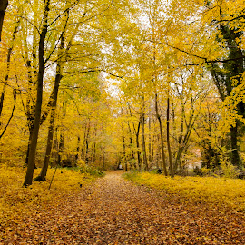 Fall Colors by Keith Reling - Landscapes Forests ( fall colors, fall, brussels, belgium )
