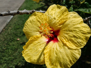 Photo: A big flower.