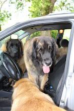 Photo: Allez, tout le monde dans la voiture à papa