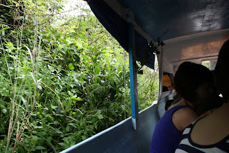 Photo: Year 2 Day 41 -  Narrow, Overgrown Tributary River We Navigated