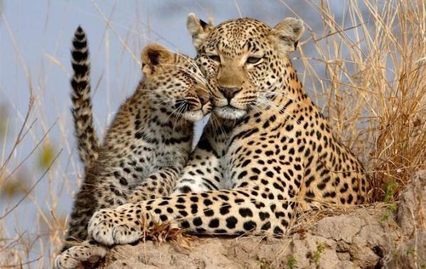 Samburu e Shaba