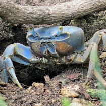 Arthropods of Bay Islands, Honduras