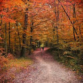 by Manuela Dedić - Landscapes Forests
