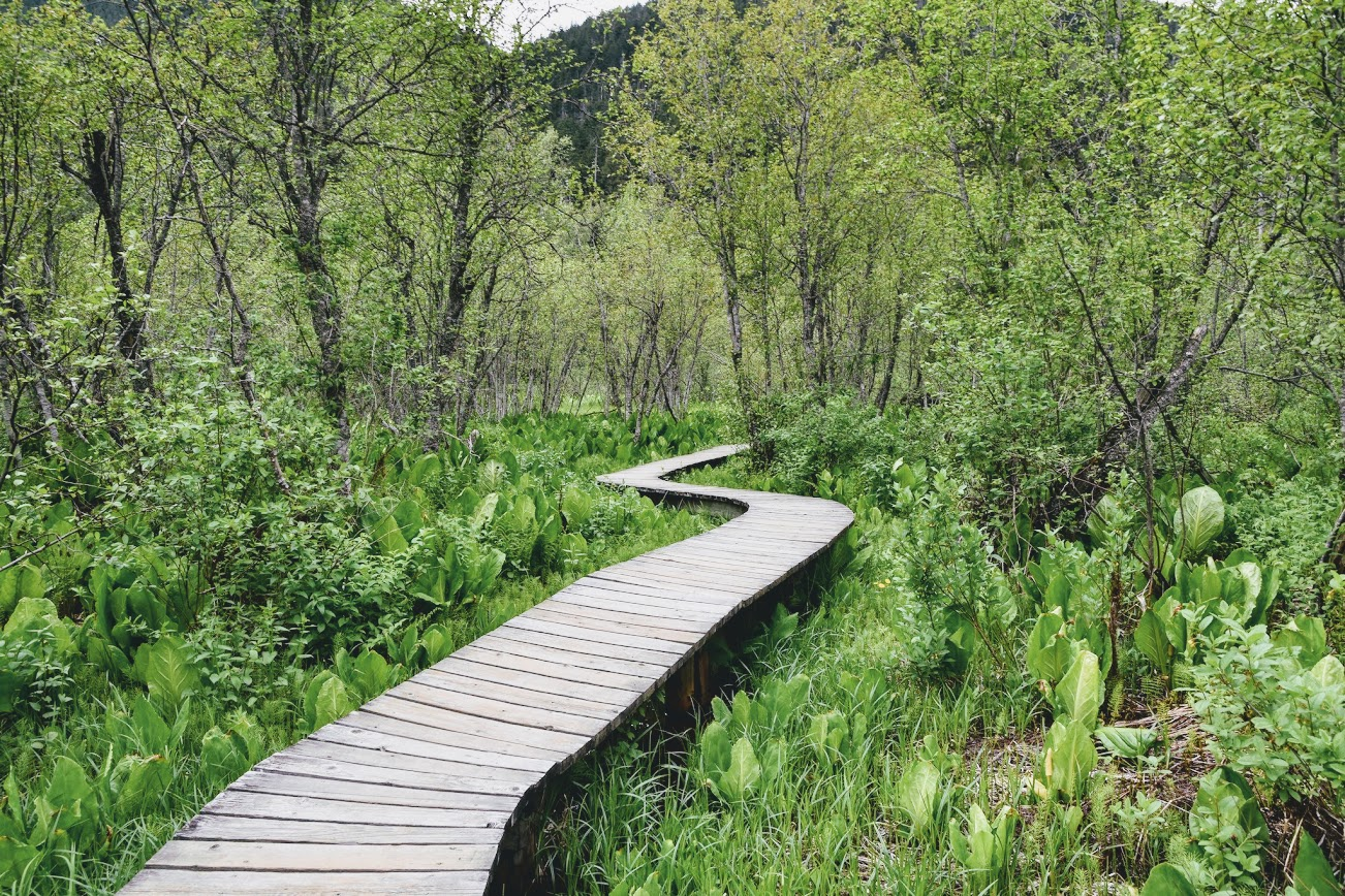 Skunk Cabbage Boardwalk
