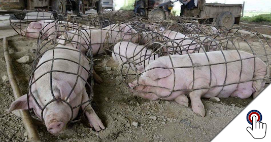 """Duke Professor Suggests Simple Solution To """"Ag-Gag"""" Laws"""