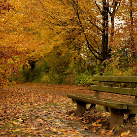 Standing still by Abhinav Ganorkar - City,  Street & Park  City Parks ( park bench, autumn colors, city park, autumn leaves, autumn,  )