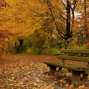 Standing still by Abhinav Ganorkar - City,  Street & Park  City Parks ( park bench, autumn colors, city park, autumn leaves, autumn,  )