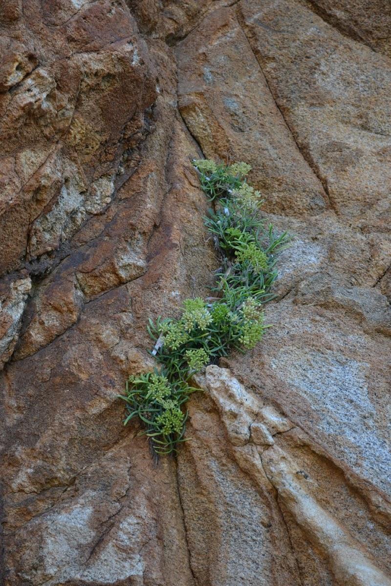 Dalla roccia con furore di lisina17
